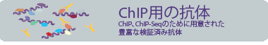 Antibodies for ChIP