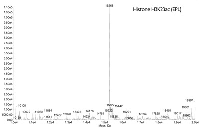 ESI-TOF mass spectrometry of Recominant Histone H3K23ac(EPL)