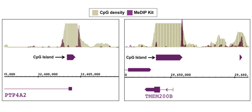 Next-Gen sequencing data generated using Active Motif's MeDIP kit detects methylation at CpG shores