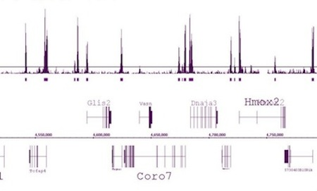 ChIP-Seq data for Histone H3K4me2 antibody using chromatin from mouse primary T cells