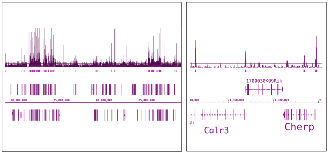 ChIP-Seq data of chromatin from T cells for OGT/O-GlcNAc transferase antibody