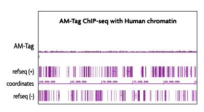AM-tag has minimal cross-reactivity with mammalian samples