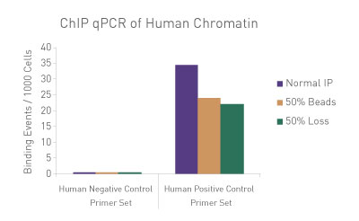 ChIP qPCR analysis using human chromatin