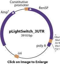 pLightSwitch_3UTR vector diagram