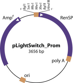pLightSwitch_Prom vector diagram