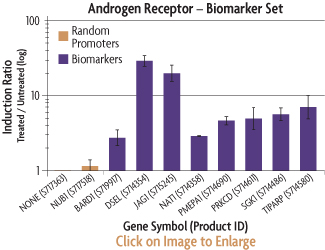 Graph showing the induction ratios of the promoter reporter constructs of the AR Biomarker Set after co-transfection into HT1080 human fibrosarcoma cells with an AR cDNA expression plasmid and treatment with methyltrienolone (R1881).