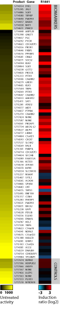 Heatmap data showing the untreated activity and induction response for each construct in the AR Pathway Profiling Plate using HT1080 fibrosarcoma cells treated with 10 nM methyltrienolone (R1881) for 24 hours following co-transfection with a promoter-reporter construct and an AR cDNA expression plasmid