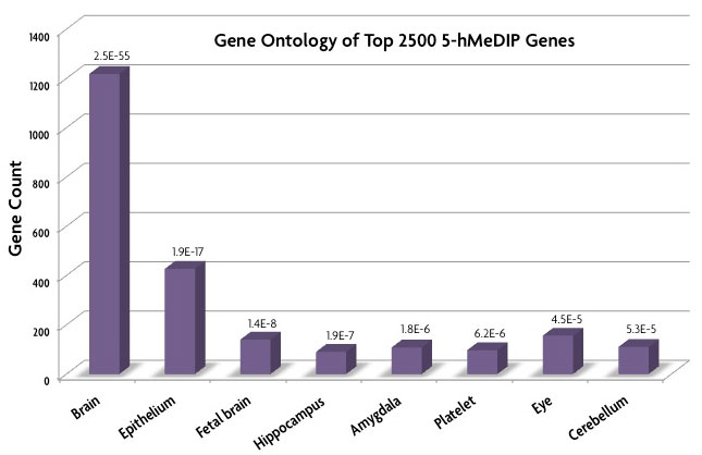 Gene Ontology analysis data generated by Active Motif Epigenetic Services of the 2,500 genes with the highest hMeDIP signals