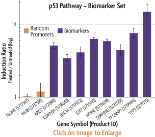 Graph showing the induction ratios of the promoter reporter constructs of the p53 Biomarker Set after transfection into HT1080 human fibrosarcoma cells and treatment with Nutlin.