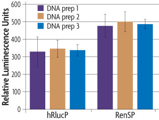 Graph comparing the relative brightness of Active Motif's RenSP compared to hRlucP, another humanized form of the Renilla luciferase