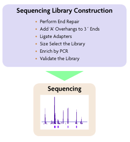 Sequencing Library Construction