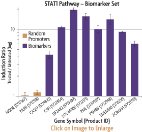 Graph showing the induction ratios of the promoter reporter constructs of the STAT1 Biomarker Set after transfection into HeLa human cervical cancer cells and treatment with interferon alpha.