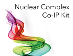 Nuclear Complex Co-IP Kit