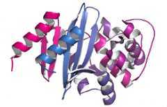 Recombinant Proteins