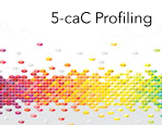 5-caC Profiling Services
