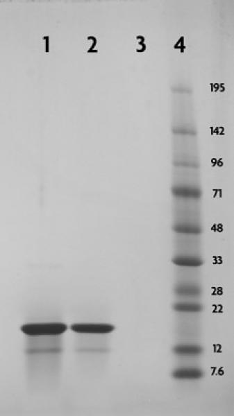 Recombinant Histone H3 acetyl Lys4 analyzed by SDS-PAGE gel.