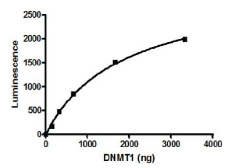 DNMT1 activity assay