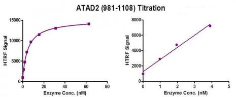 ATAD2 (981-1108) protein activity assay.
