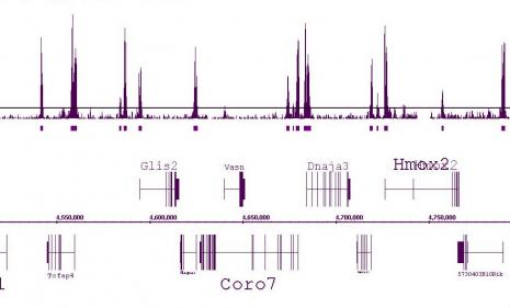 Histone H3K4me2 antibody (pAb) tested by ChIP-Seq.