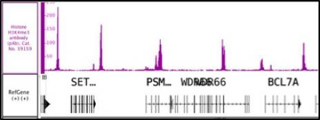 Histone H3K4me3 antibody (pAb) tested by ChIP-Seq.
