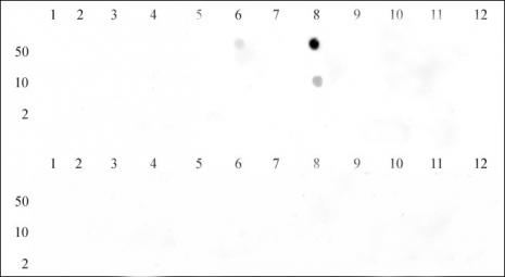 Histone H3K9me3 antibody (pAb) tested by dot blot analysis.