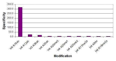 Histone H4 acetyl Lys16 antibody specificity tested by peptide array analysis.
