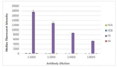 Specificity testing of Histone H3, C-terminal polyclonal antibody