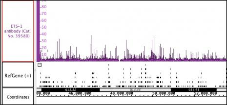 ETS-1 antibody (pAb) tested by ChIP-Seq.
