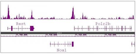 Histone H3R8me2a (asymmetric) antibody (pAb) tested by ChIP-Seq.