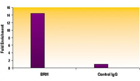 SMARCA2 / BRM antibody (mAb) tested by ChIP.