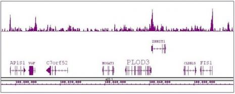 Boris / CTCFL antibody (pAb) tested by ChIP-Seq.