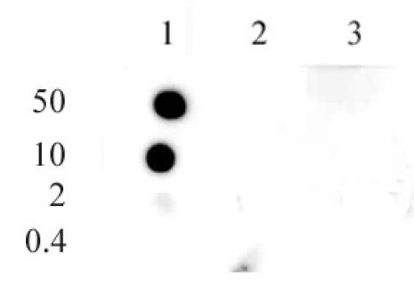 Histone H3K9me1 antibody (pAb) tested by dot blot analysis.
