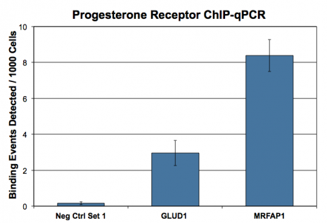 Progesterone Receptor antibody (mAb) tested by ChIP.