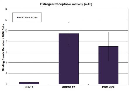 Estrogen Receptor-α antibody (mAb) tested by ChIP.