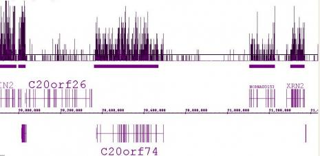 Histone H3K36me3 antibody (pAb) tested by ChIP-Seq.
