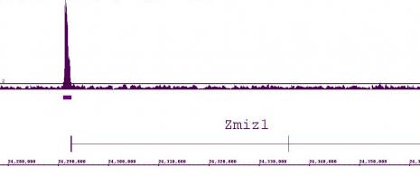 LXR-α antibody (pAb) tested by ChIP-chip.