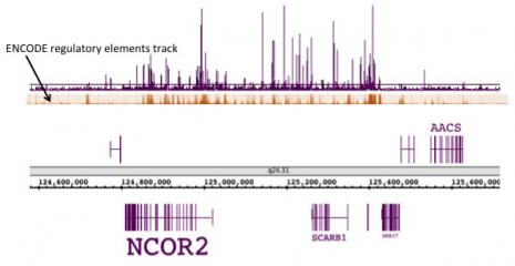 NR2F2 / COUP2 antibody (pAb) tested by ChIP-Seq.