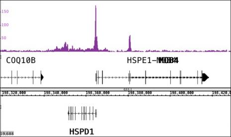 ChIP-Seq analysis of CTBP2 (pAb)