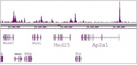 SRF antibody (mAb) tested by ChIP-Seq.