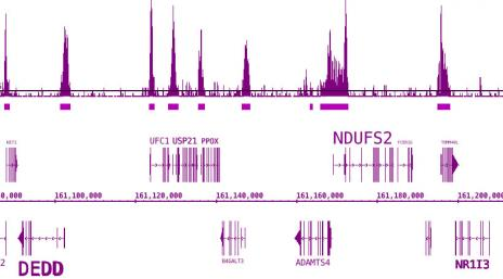 BRD3 antibody (pAb) tested by ChIP-Seq.