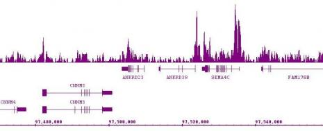BRD9 antibody (pAb) tested by ChIP-Seq.