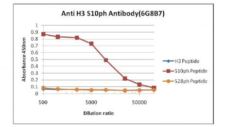 Histone H3S10ph antibody (mAb) tested by ELISA.