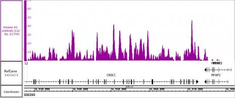 Histone H3 antibody (pAb) tested by ChIP-Seq.