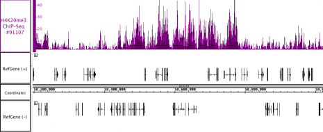 AbFlex<sup>®</sup> Histone H4K20me3 antibody (rAb) (biotin) tested by ChIP-Seq.